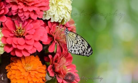 Butterfly Effect5