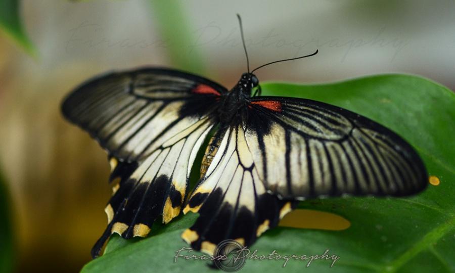 Butterfly Effect3