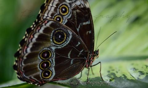 Butterfly Effect10