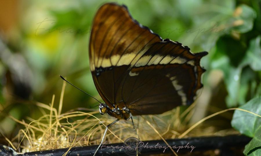 Butterfly Effect12
