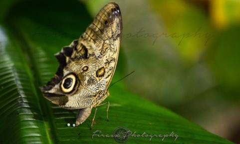 Butterfly Effect6