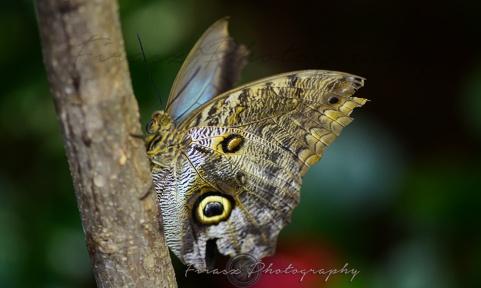 Butterfly Effect9
