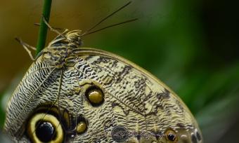 Butterfly Effect11