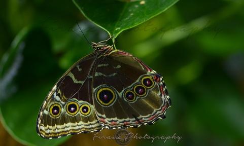 Butterfly Effect7
