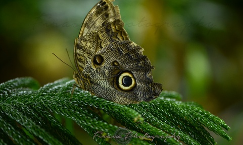 Butterfly Effect8