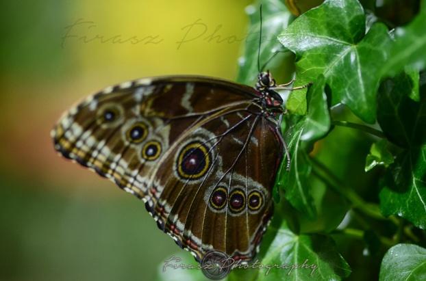 Butterfly Effect13