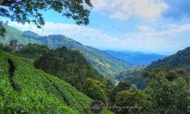 Dense Hills2