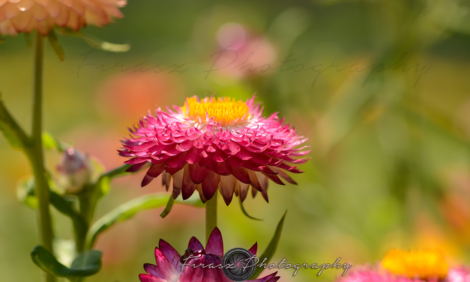 Kashmir Bouquet1