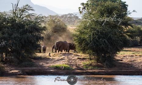 Mammoths of Samburu4