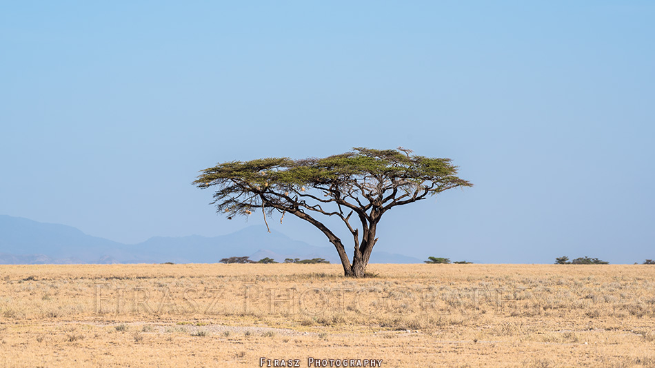 Trees of Mara10
