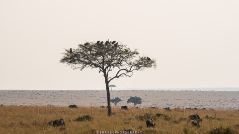 Trees of Mara1