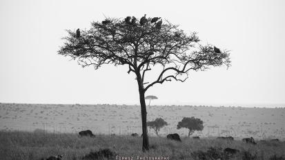 Trees of Mara6 bw