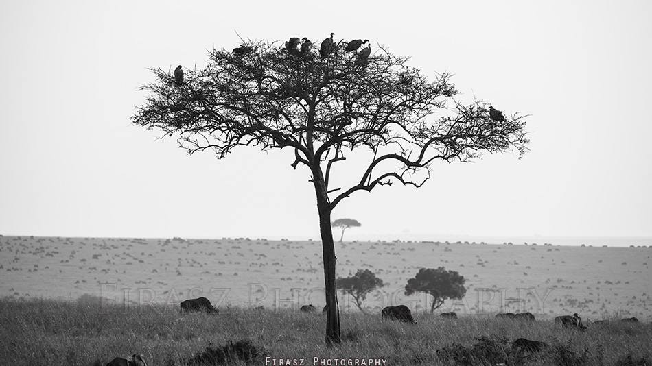 Trees of Mara6 bw