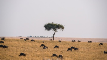 Trees of Mara4