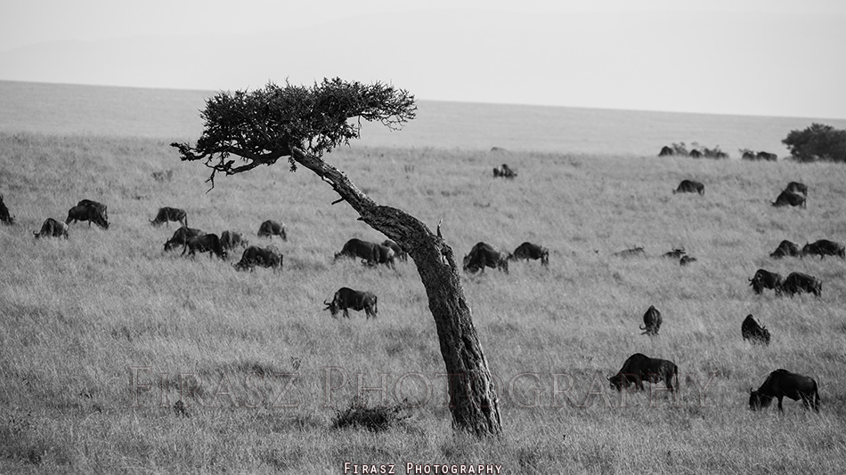 Trees of Mara8 bw