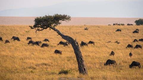 Trees of Mara3