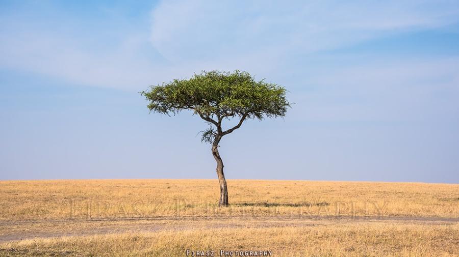 Trees of Mara2