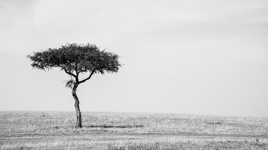Trees of Mara7 bw