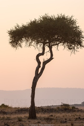 Trees of Mara5