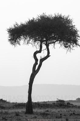 Trees of Mara9 bw